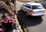 春已至,勿负春光,有车的童鞋走起~